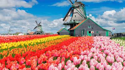 Pasar Bunga di Amsterdam