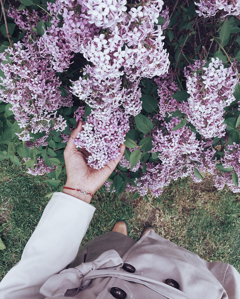 Favourite Things: Late-Spring Lilacs