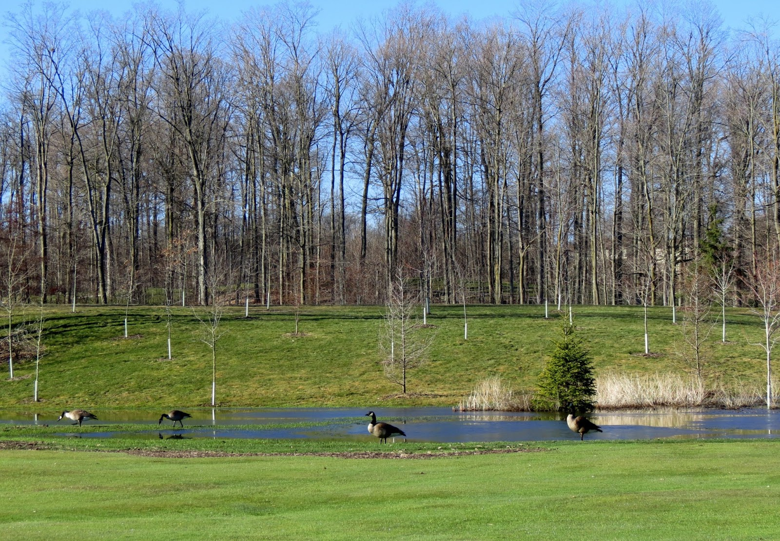 westmount golf and country club kitchener travels with birds birding at westmount golf and country 9609