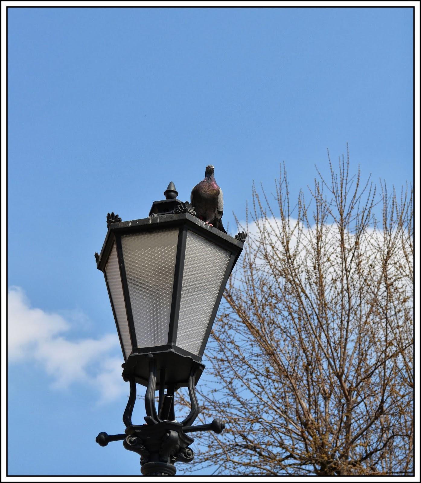 Mój Kuferek Ptaki Mojego Miasta Fotografie