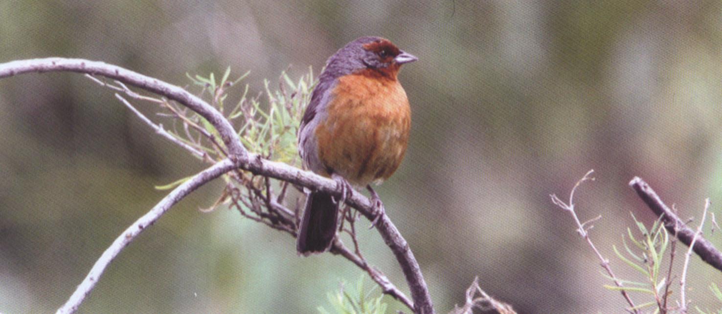 Aves en Bolivia