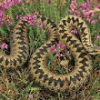 Snakes and Adders