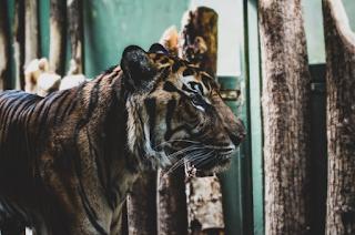 https://www.katabijakpedia.com/2019/04/contoh-descriptive-text-about-animal-dalam-bahasa-inggris-dan-artinya.html