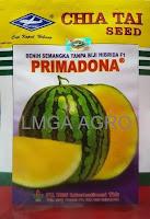 semangka primadona, semangka non biji, semangka kuning, benih cap kapal terbang, toko pertanian, toko online, lmga agro