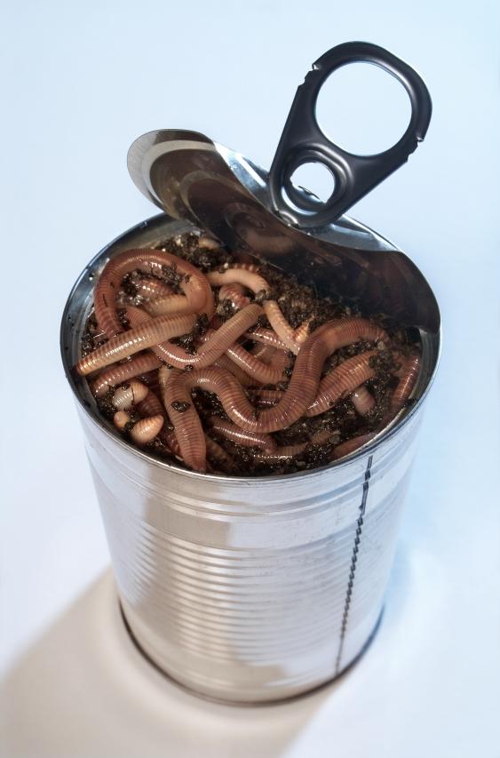 IMAGE(http://1.bp.blogspot.com/-72Nv9VtDwiE/T5qbAL5YGpI/AAAAAAAAC2Y/KgAsgWKjanc/s1600/can-of-worms.jpg)