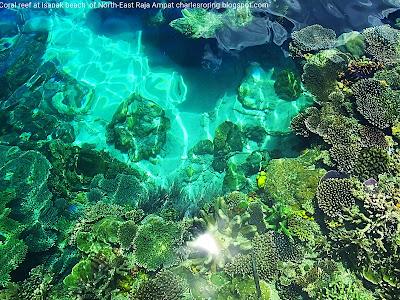 Pristine coral reef of Raja Ampat