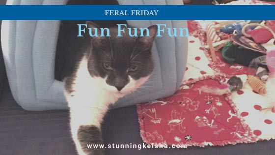 Feral Friday Fun Fun Fun