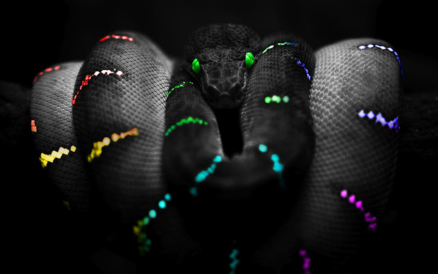 Snake Selective Color Hd Wallpaper Nature Wallpapers