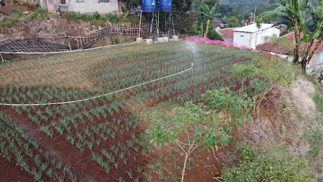 2022, Kementan Targetkan Bangun 2.358 Kampung Hortikultura