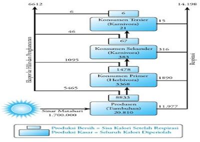 Aliran energi dari satu organisme ke organisme lain (kkal/m2/tahun)