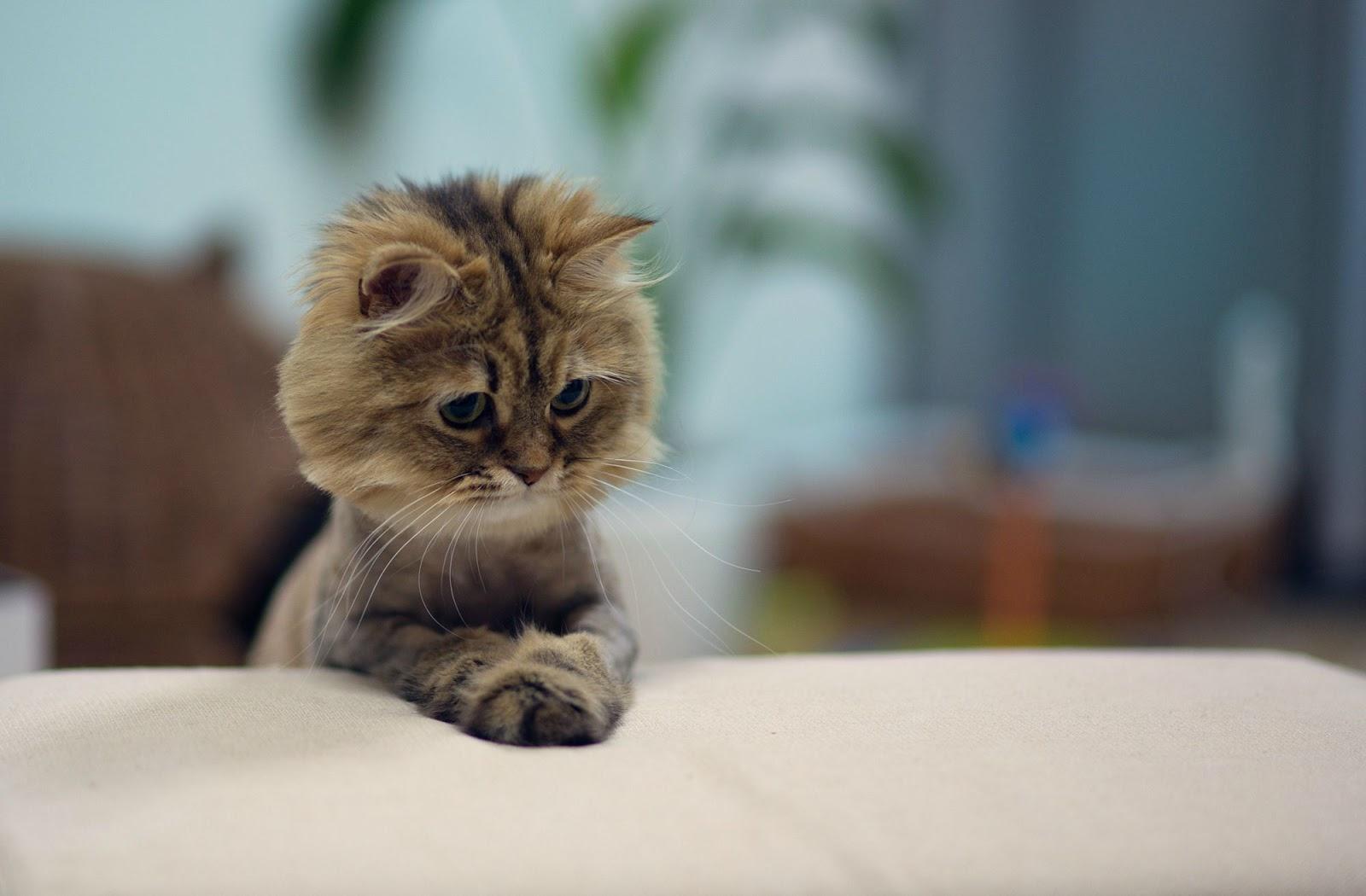 Funny Cats: Funny Cats - Part 56 (30 Pics + 10 Gifs)