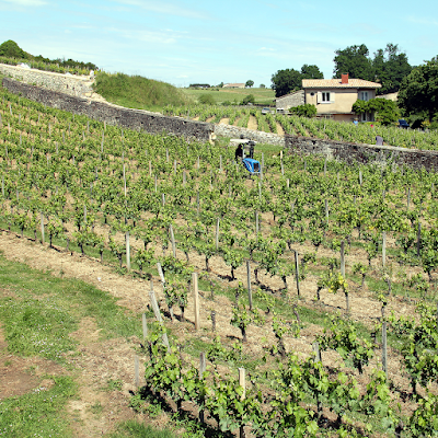 Excursions to the vineyards.