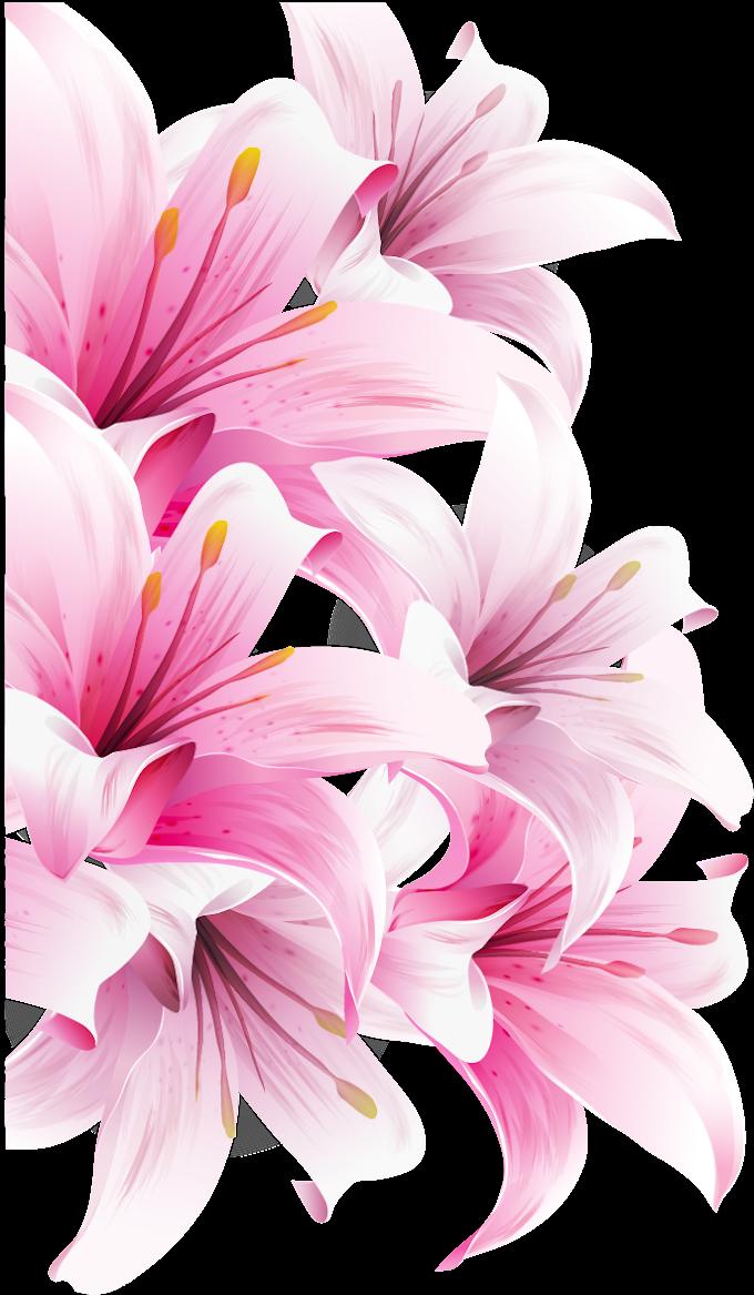 Pink flowers, Lilium bulbiferum Easter lily Arum-lily Desktop Flower, magnolia, herbaceous Plant, lilium png free png