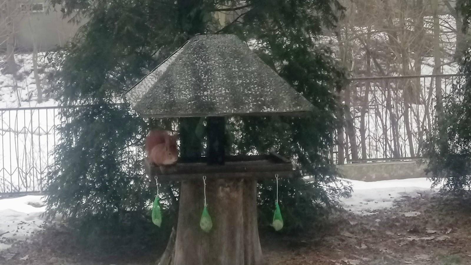 Pomagamy ptakom... i wiewiórkom w czasie zimy