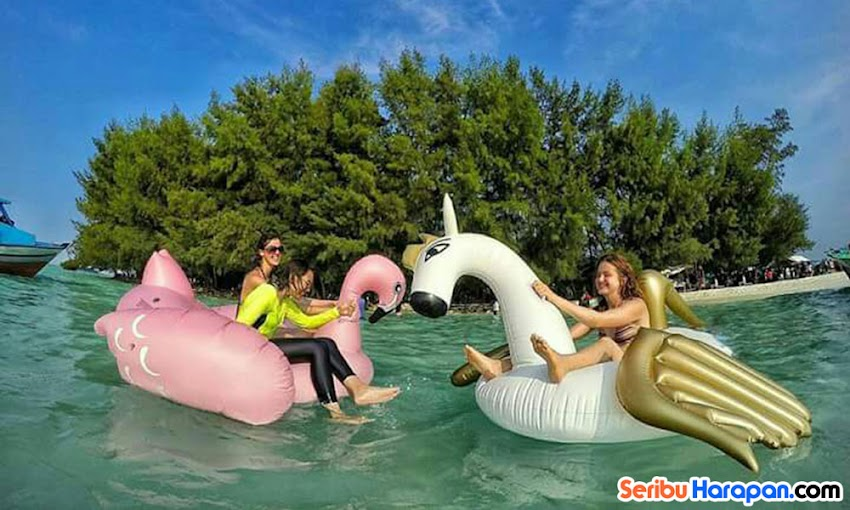 pulau dolphin dan paket wisata pulau kelapa dolphin