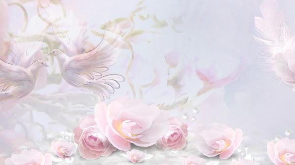 wallpaper hd mawar putih