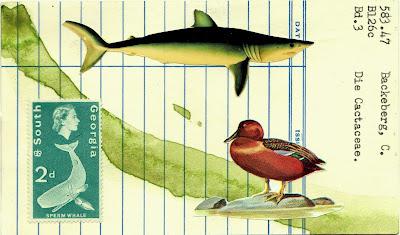 mail art library card Dada Fluxus collage duck shark south georgia Queen Elizabeth sperm whale giant squid postage stamp