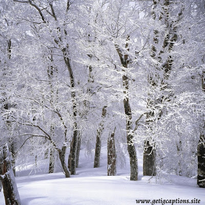 Winter Captions,Instagram Winter Captions, Winter Captions For Instagram