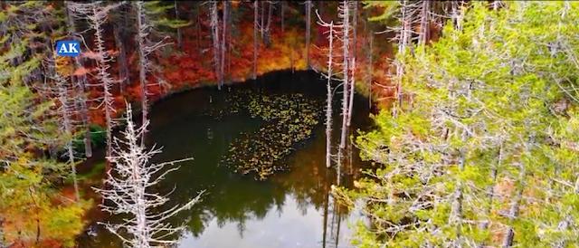 Zαγόρι:Ζορίκα,η παραμυθένια λίμνη με τα νούφαρα![video]