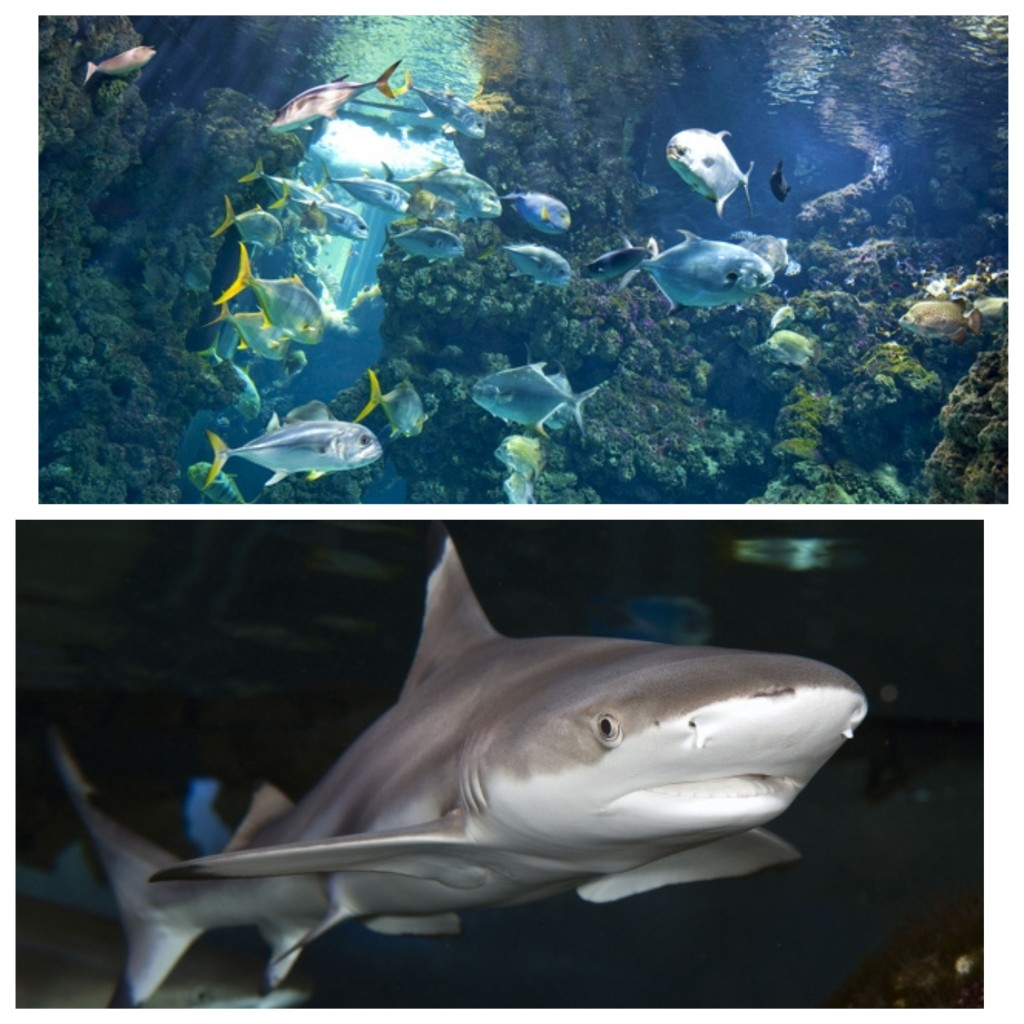 Sharks and Fishes in Oceanographic Museum