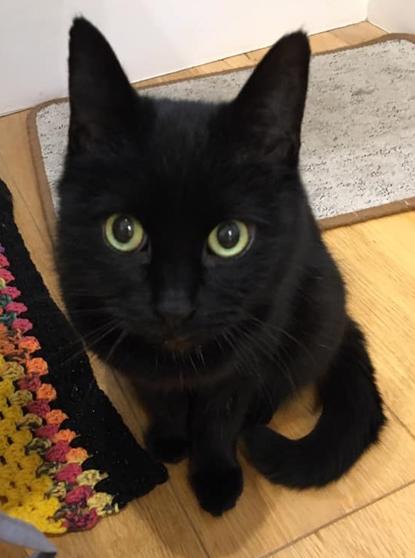 black cat sitting on wooden floor