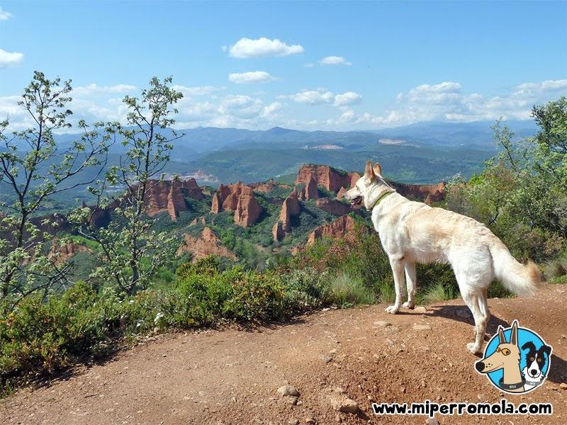Can de Palleiro en una ruta de senderismo con perros en Las Médulas de Carucedo