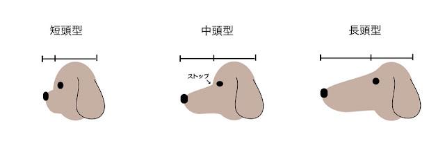 tamanho do focinho de cães