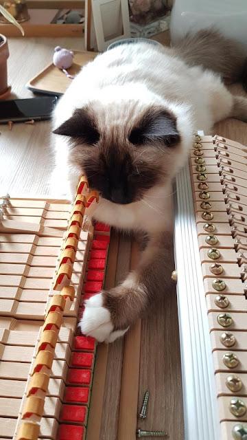 Réglage mécanique avec chat 2