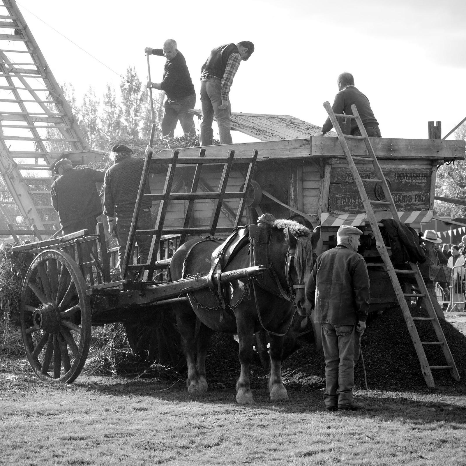 Le battage du blé noir Battage-ancienne-cheval-trait-breton-fete-de-la-galette-pipriac-2010-musardise-pays-de-vilaine-sarrasin-ble-noir-bretagne-
