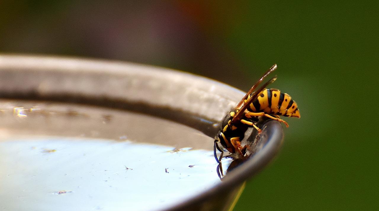 abeja tomando agua