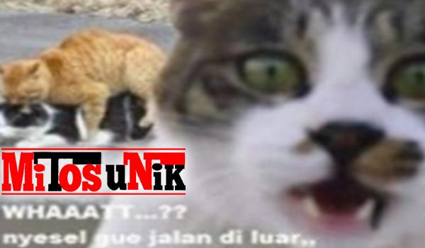Download 75 Gambar Lucu Kucing Oren Terupdate