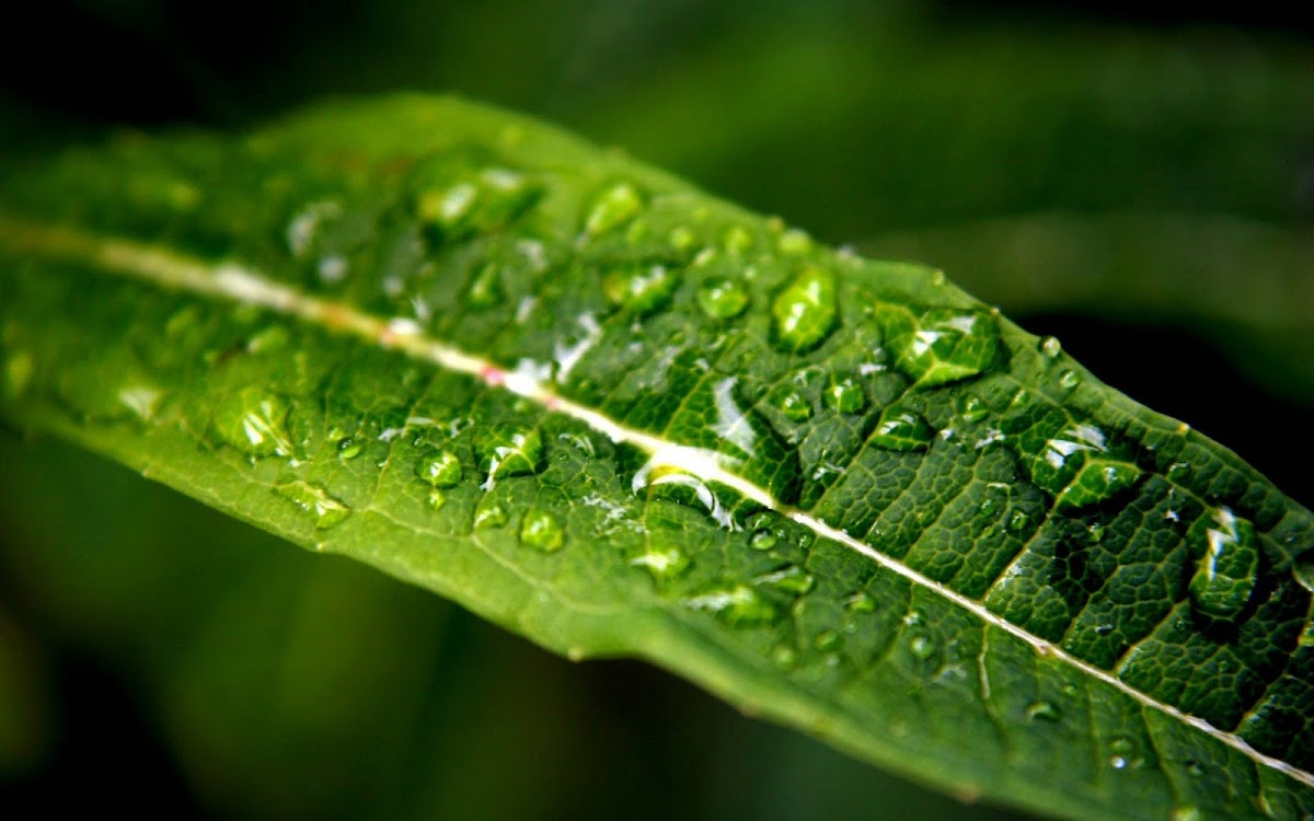 Amazing Water Drops Widescreen HD Wallpaper 9