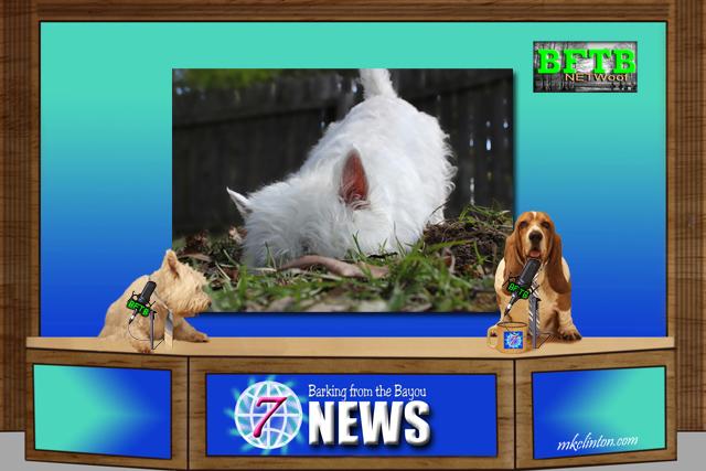 BFTB NETWoof News