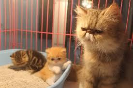 Efek Kucing Digunduli Yang Perlu Kita Ketahui