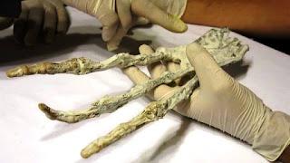 Resultado de imagen de mano extraterrestre en peru