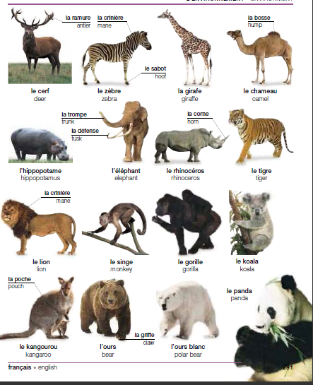 http://1.bp.blogspot.com/-73xjZFxlga8/T5n-FJroZgI/AAAAAAAAABo/yyoThf0BOpY/s1600/animaux2.png
