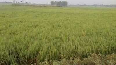 মহলওয়ারি-বন্দোবস্ত