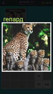 сидит гепард вокруг которого находятся его детеныши 22 уровень 667 слов
