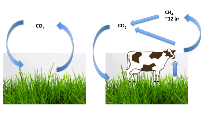 äta kött dåligt för miljön