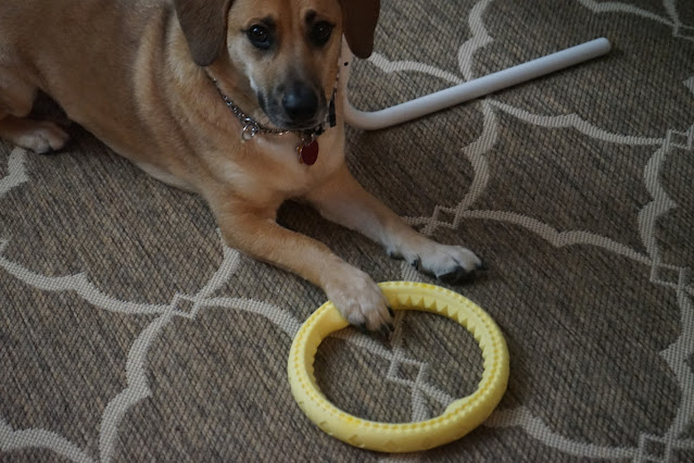 Pup laying with foot on ring toy