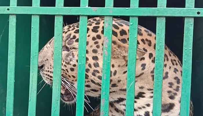 Increase in Tiger,  Lion and Leopards population,  The wildlife, The wildlife india blog,