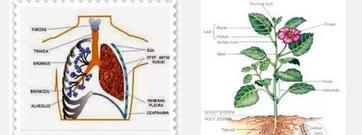 organ pada manusia dan tumbuhan