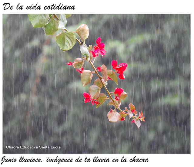 Santa Rita bajo la lluvia -  Chacra Educativa Santa Lucía