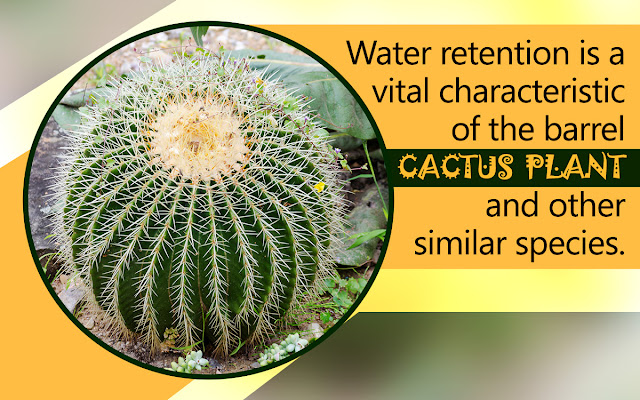 Cactus-xerophytes