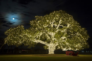Cedar Park's town tree illuminated with holiday lights set against the backdrop of a nearly full moon in Texas