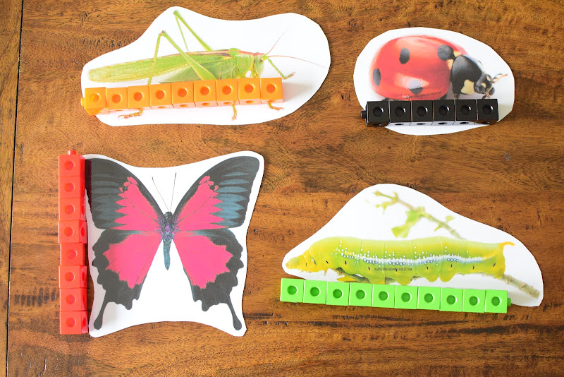 INSECT THEMED MEASURING ACTIVITY