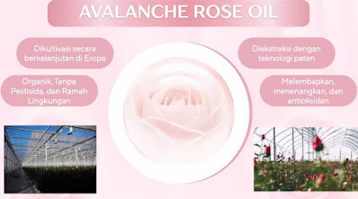 Avalanche Rose Oil