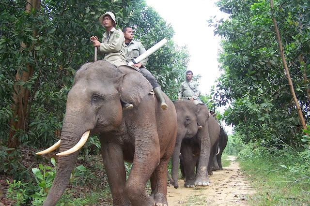 TAMAN Nasional Tesso Nilo merupakan contoh bentang alam hutan dataran rendah Sumatera yang luas.   Kawasan hutan ini merupakan salah satu hutan terkaya di dunia yang menjadi kawasan hutan lindung dan merupakan salah satu dari 200 Ecoregion WWF Global. Kawasan Tesso Nilo ini menyediakan habitat yang layak bagi gajah dan harimau sehingga juga menjadikan area tersebut menjadi kawasan yang aman bagi spesies – spesies lain yang langka dan terancam punah.   Kawasan Hutan Tesso Nilo dikenal memiliki keanekaragaman hayati yang cukup tinggi baik flora maupun fauna. Berdasarkan penelitian Andi gilison (tahun 2001) menemukan bahwa tesso nilo memiliki 218 jenis tumbuhan Vascular ( berpembuluh) dalam petakan tiap 200 M².  Untuk masuk ke Taman Nasional Tesso Nilo, Anda harus memiliki izin yang ditandatangani Kepala Taman Nasional Tesso Nilo. Izin tersebut dapat diperoleh di Markas WWF di Pangkalan Kerinci di Pelalawan, Riau.    Aksesibilitas ke Kabupaten Pelalawan Dari Kota Pekanbaru ke Pangkalan Kerinci dapat menggunakan bus PO Ranah Makmur, PO Indah Travel, PO Silvana, PO Inhil Jaya atau langsung ke Terminal Bandar Raya Payung Sekaki menggunakan Taksi, Angkutan Umum Bus Transmetro, atau dengan menggunakan Travel Agent di Kota Pekanbaru.   Transportasi di Kabupaten Pelalawan Wisatawan dapat menggunakan kendaraan pribadi untuk mengunjungi atraksi wisata yang ada di Kabupaten Pelalawan atau menggunakan transportasi lokal seperti Oplet, Becak dan Ojek.   Ekonomi Kreatif Dekranasda Pelalawan Rumah Batik Andalan Gerai UMKM Bono Andalan Pengrajin Gerabah  Potensi Investasi di Kawasan Objek Wisata Bono Wahana Permainan Permainan air (Surfing, Kayaking, Banana Boat, Flying Fish, Jetsky, Boat Wake Surfing, Bono Rodeo, Kolam Renang dan Kolam Arus Camping Ground,Outbound, ATF, Tracking Agrowisata Operator Selancar Bono (Guest Handling, Rigid Inflatable Boat, Pilot/ Guide, Konsumsi, Akomodasi, Transport )   Jarak Tempuh ke Ekowisata Tesso Nilo Ekowisata Teso Nillo merupakan objek wisata eks