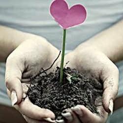 Plante com o coração