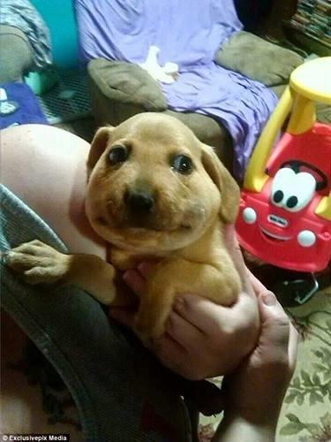 Bật cười với những chú chó dám thách thức tổ ong